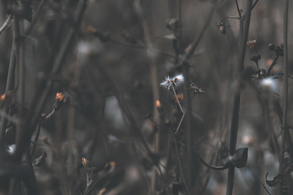 trinitaria-planta